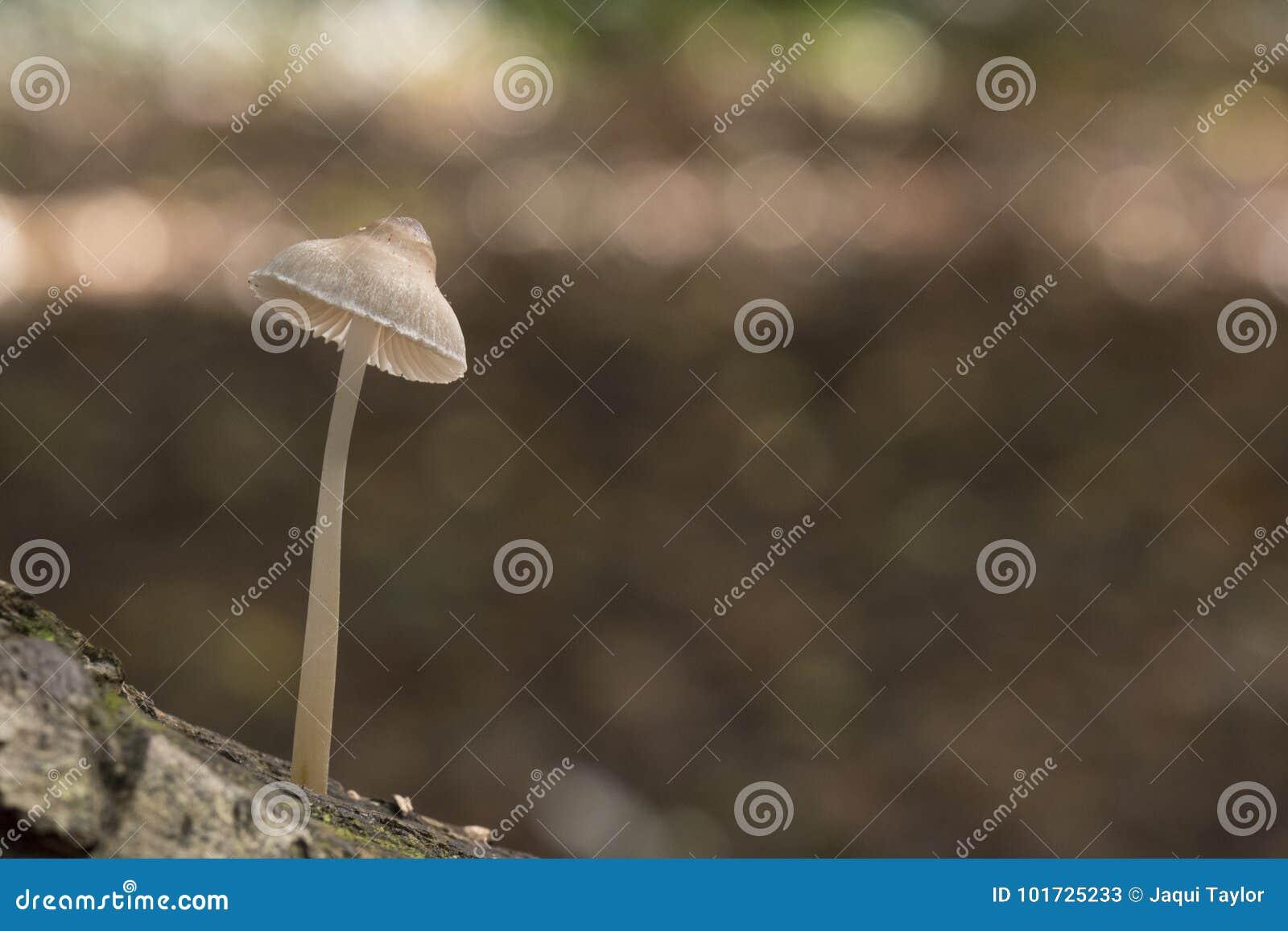 A tiny mushroom