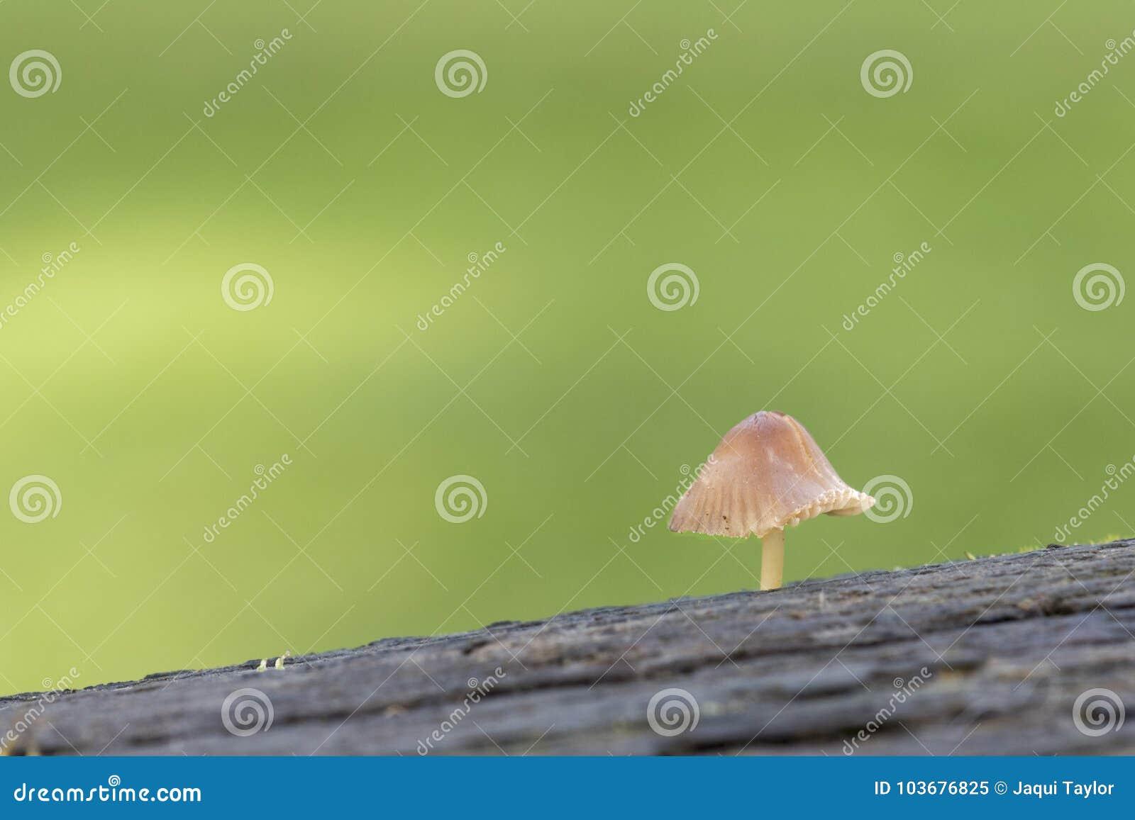 A tiny mushrooms on Southampton Common
