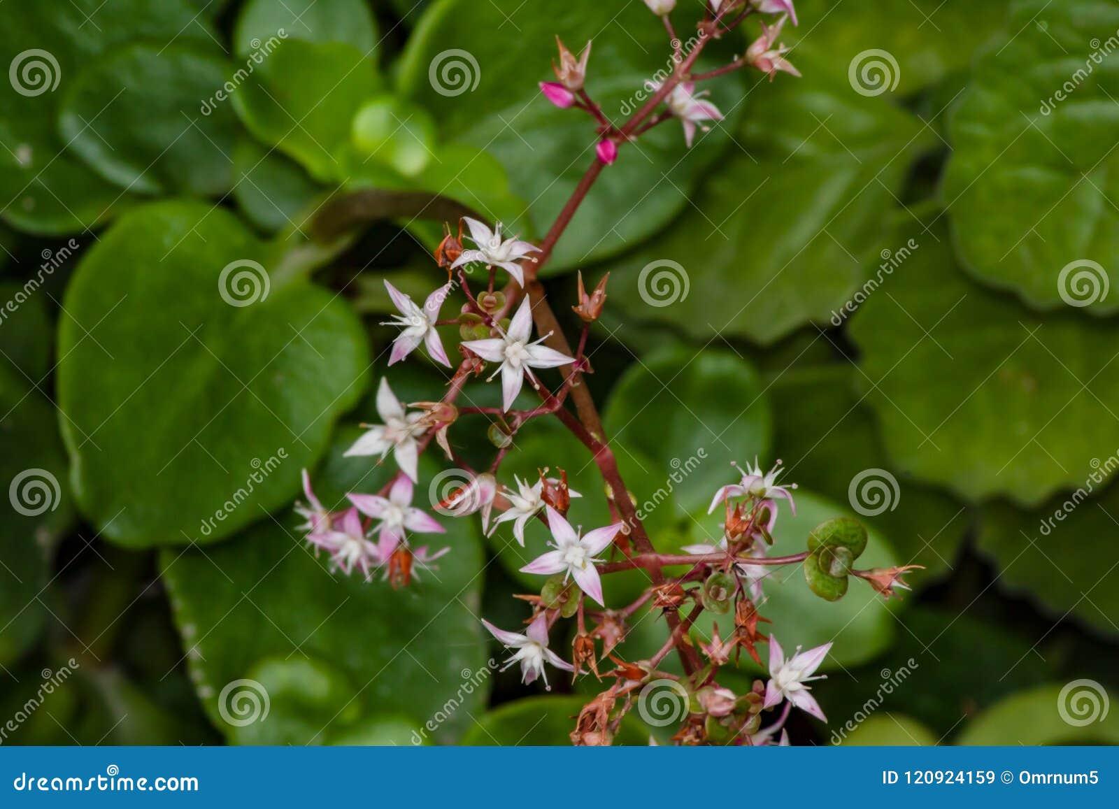 Tiny Pink Beauty Stock Image Image Of Background Three 120924159