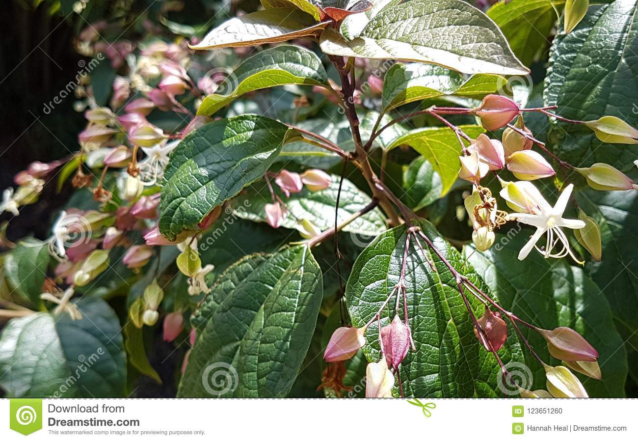 Small Pink And White Flowers With Leaves Stock Photo Image Of