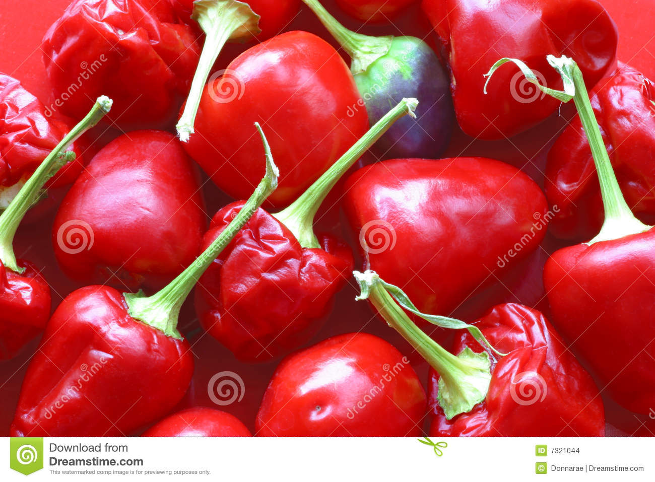 Tiny Red Hot Chili Peppers, Stock Images - Image 7321044-9906