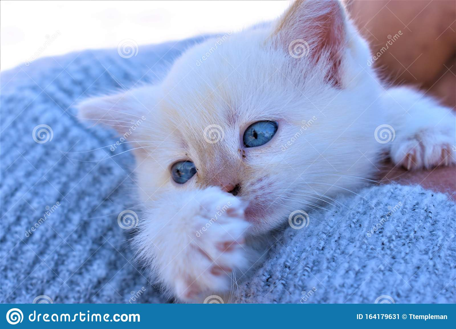 Tiny Rescue Kitten Gets A Home Stock Image Image Of White Homes 164179631
