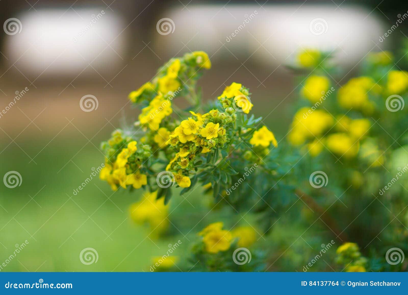 Tiny Yellow Flowers Stock Photo Image Of Wilderness 84137764