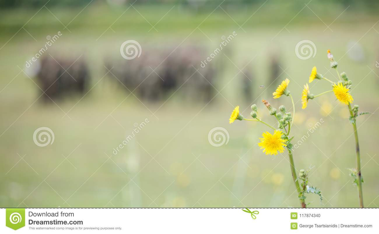 Tiny Yellow Flowers In Meadow With Blurred Nature And Soldiers