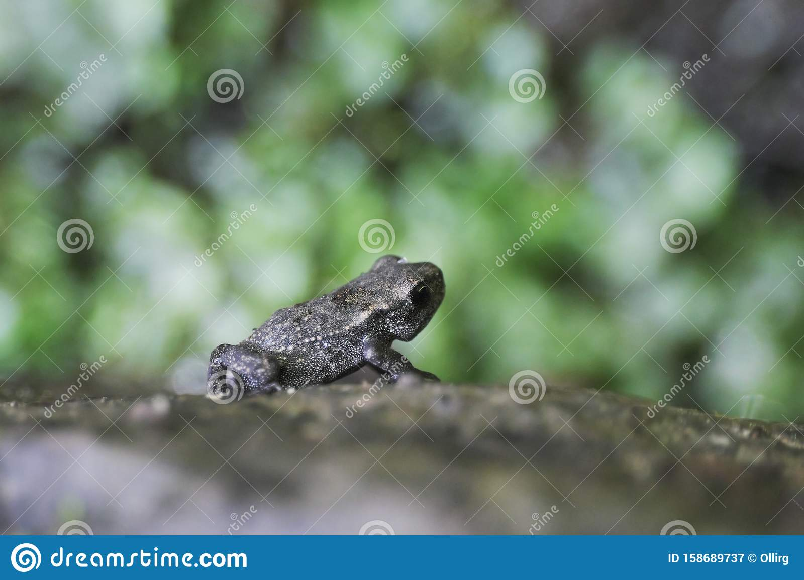 Tiny Young Toad