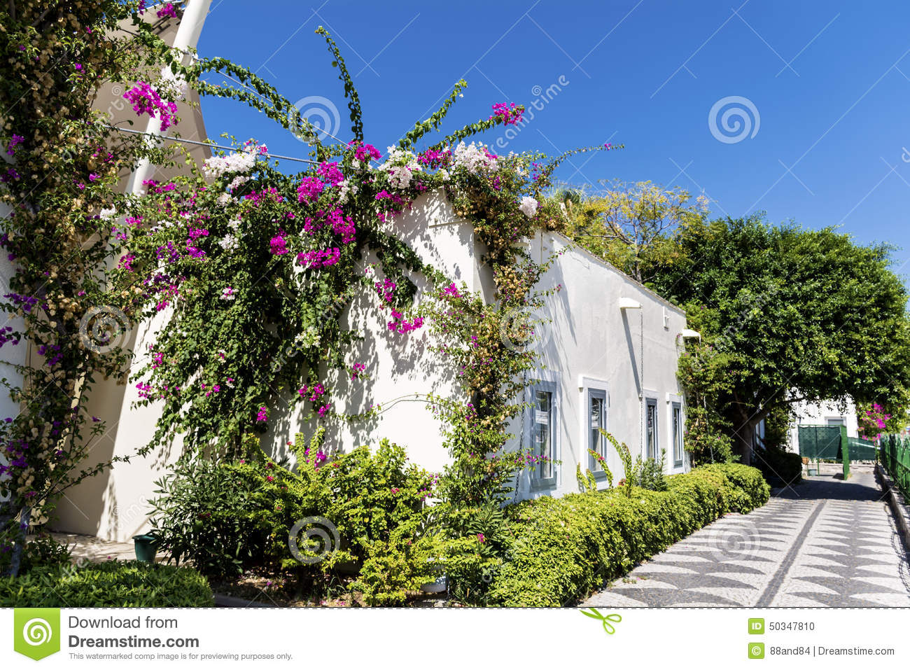 Typical turkish street with white house and bougainvillea flower typical turkish street with white house and bougainvillea flower mightylinksfo