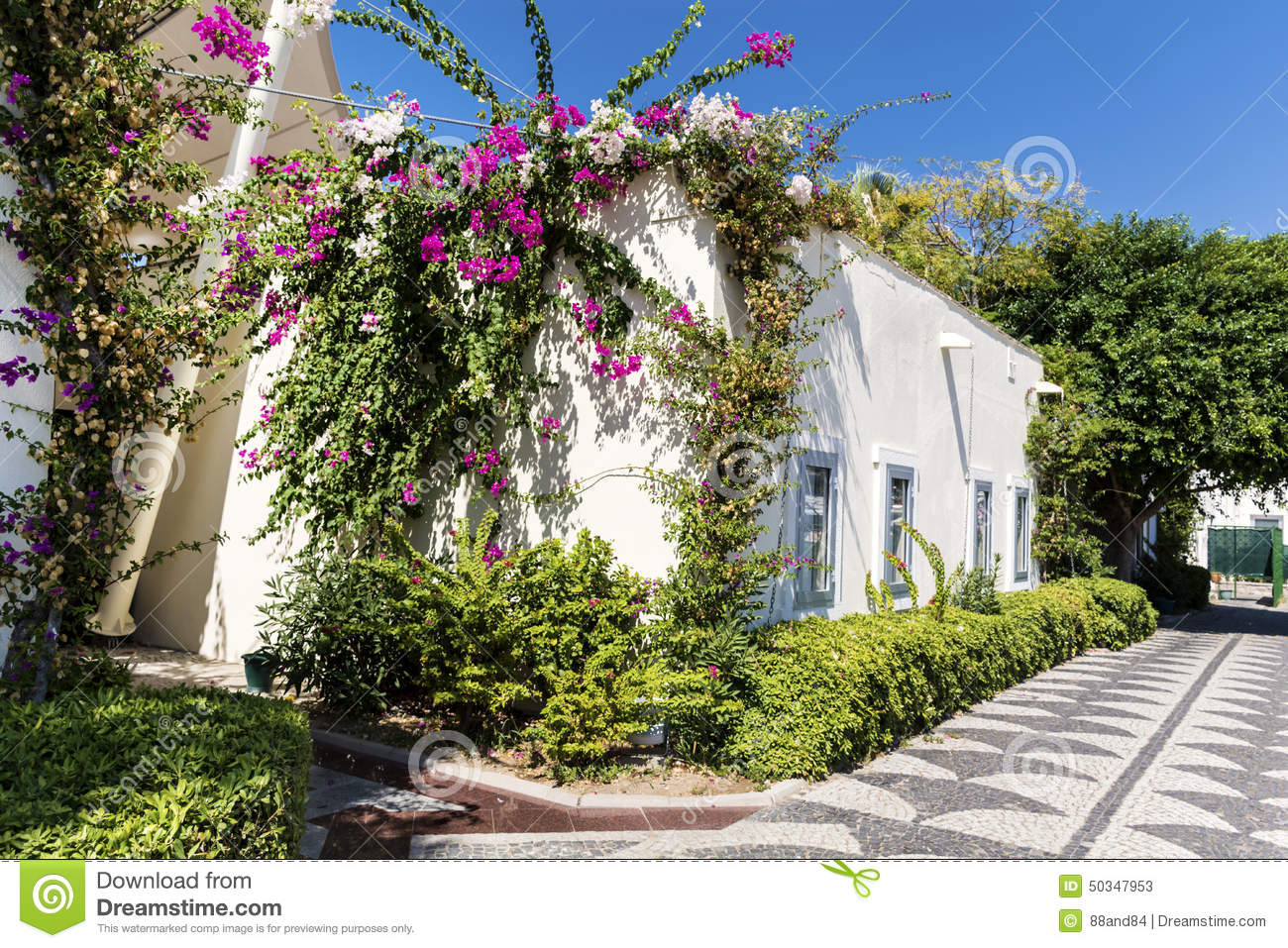 Picturesque alley and bougainvillea flower royalty free stock photography - White flowering house plants ...