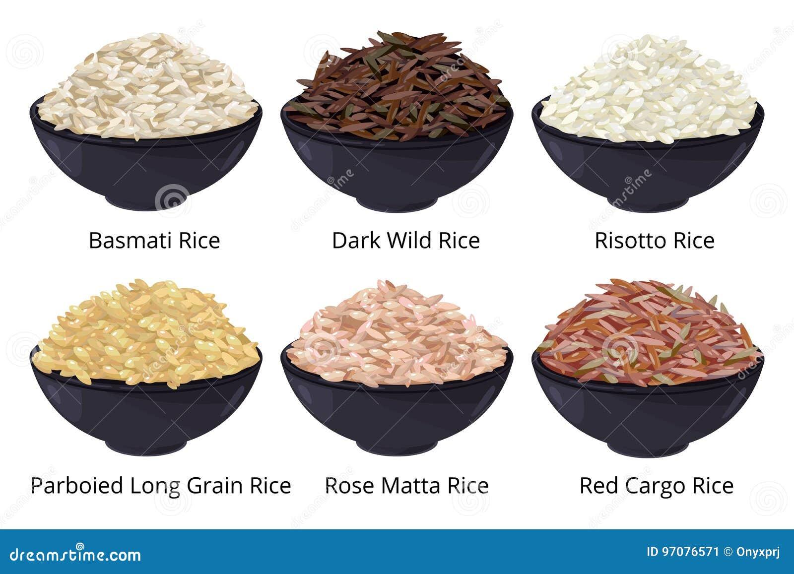 Tipo diferente de arroz Grão longa, marrom, branco e outro Ilustrações do vetor no estilo dos desenhos animados
