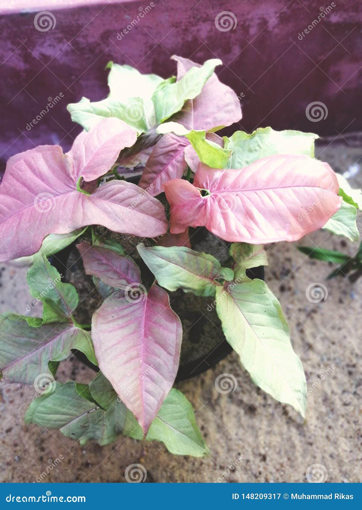 Tipo diferente de planta do croton