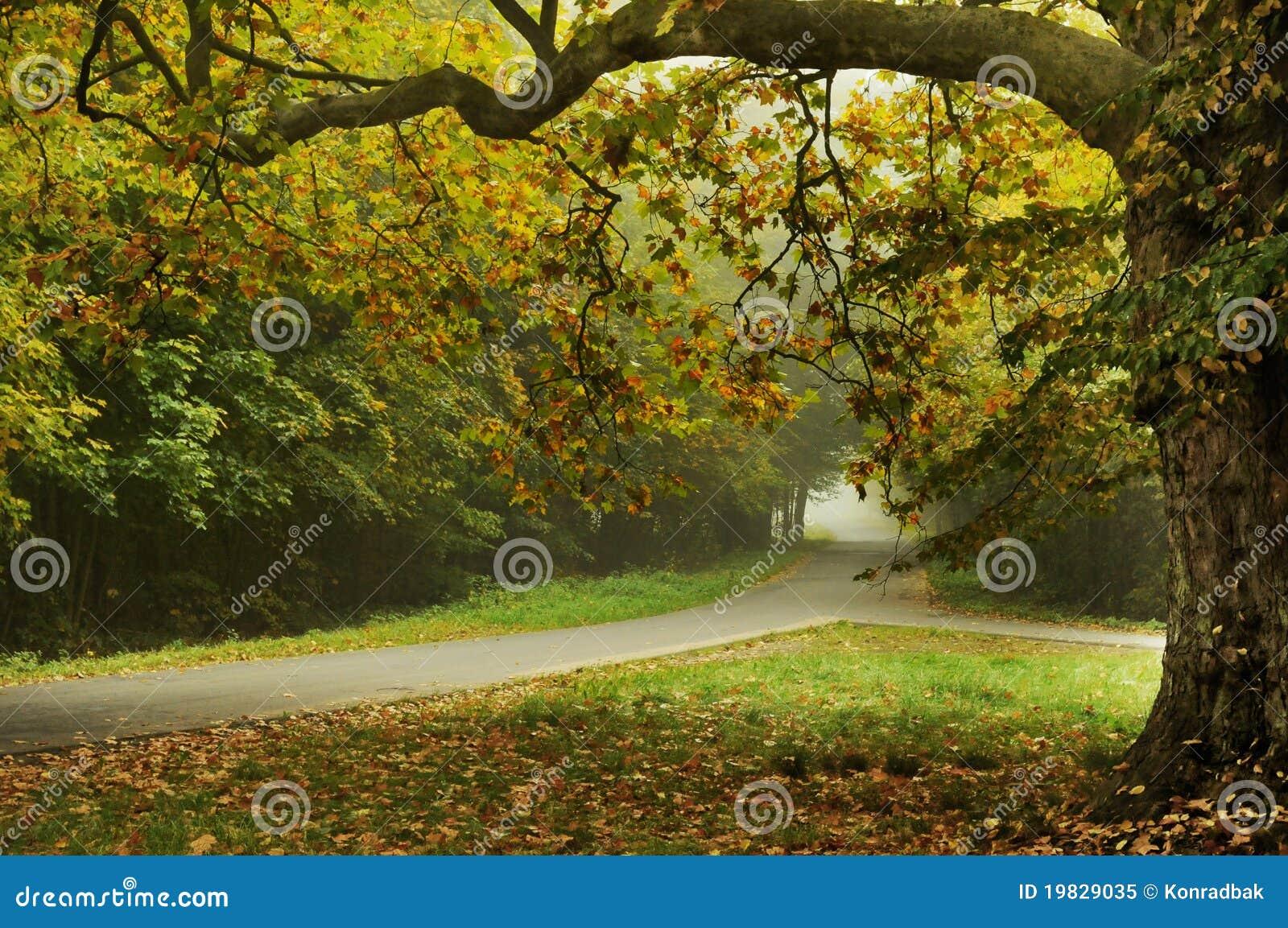 Tipo paisaje del otoño