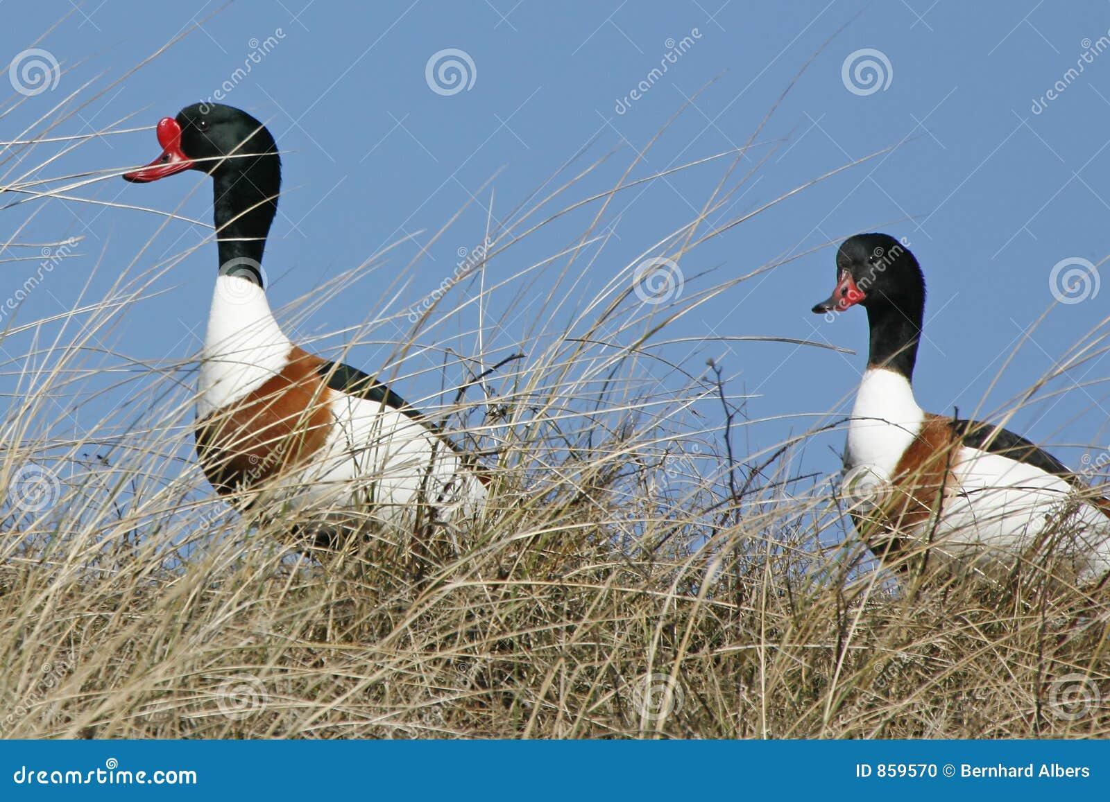 Tipo-patos