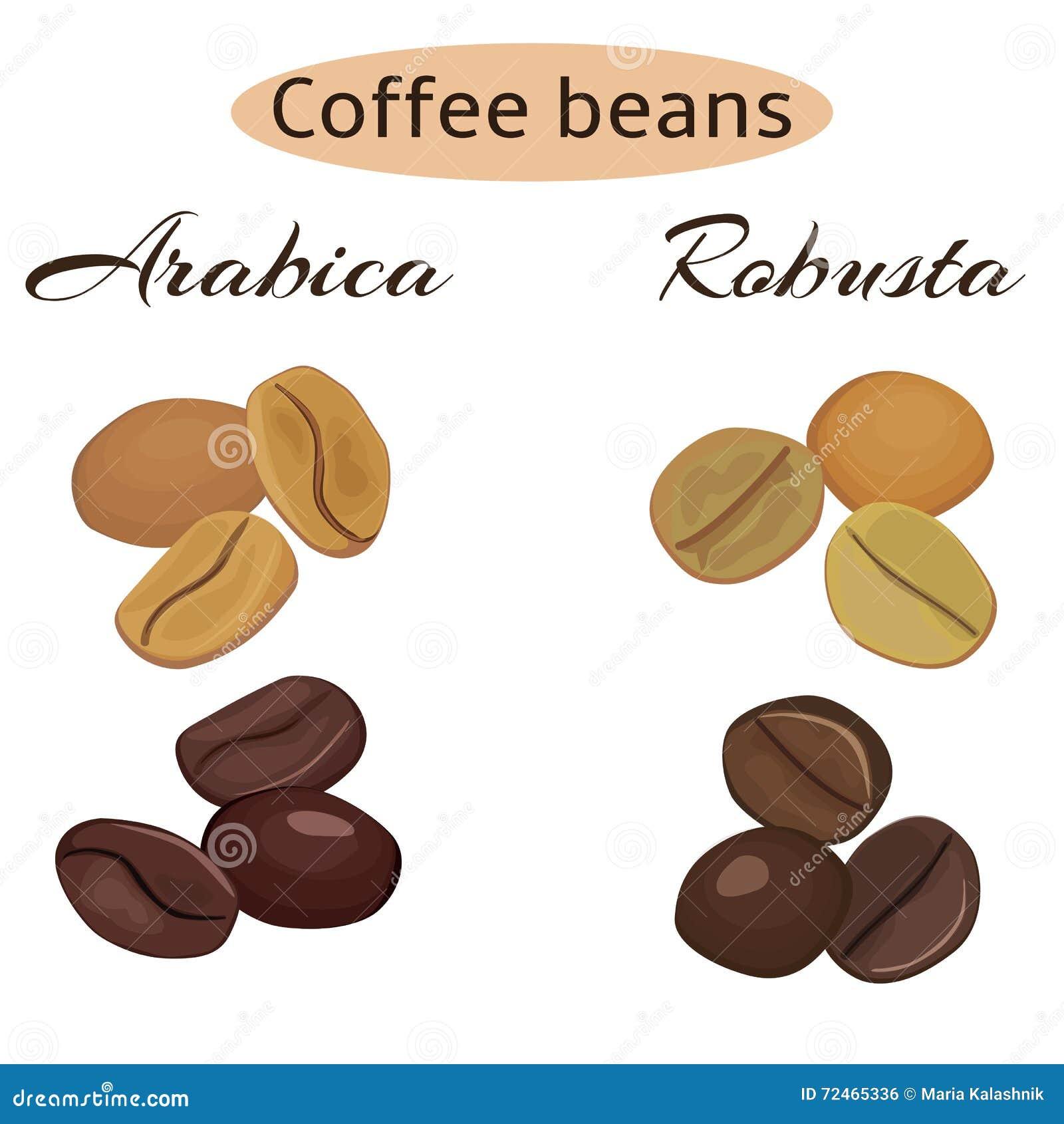Tipos de granos de caf ilustraci n del vector imagen for Tipos de granitos