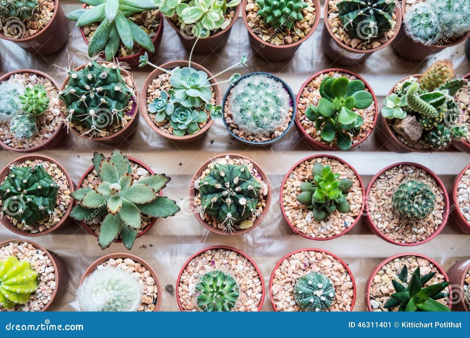 Tipos de vaious de cactus imagen de archivo imagen de for Clases de cactus
