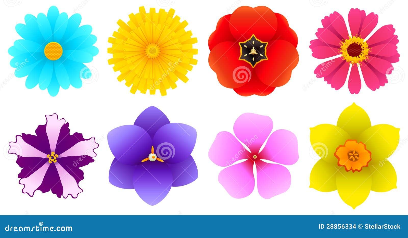 Tipos diferentes das flores vista superior imagens de - Tipos de plantas ...