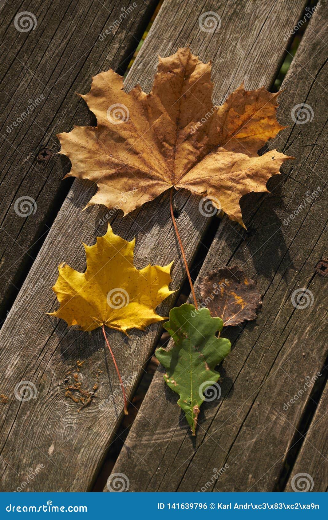 Tipos diferentes das folhas Vermelho, amarelo e verde