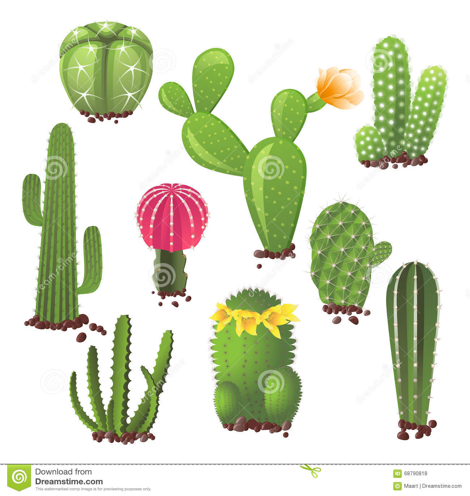 Tipos diferentes de cactos ilustra o do vetor imagem for Clases de cactus