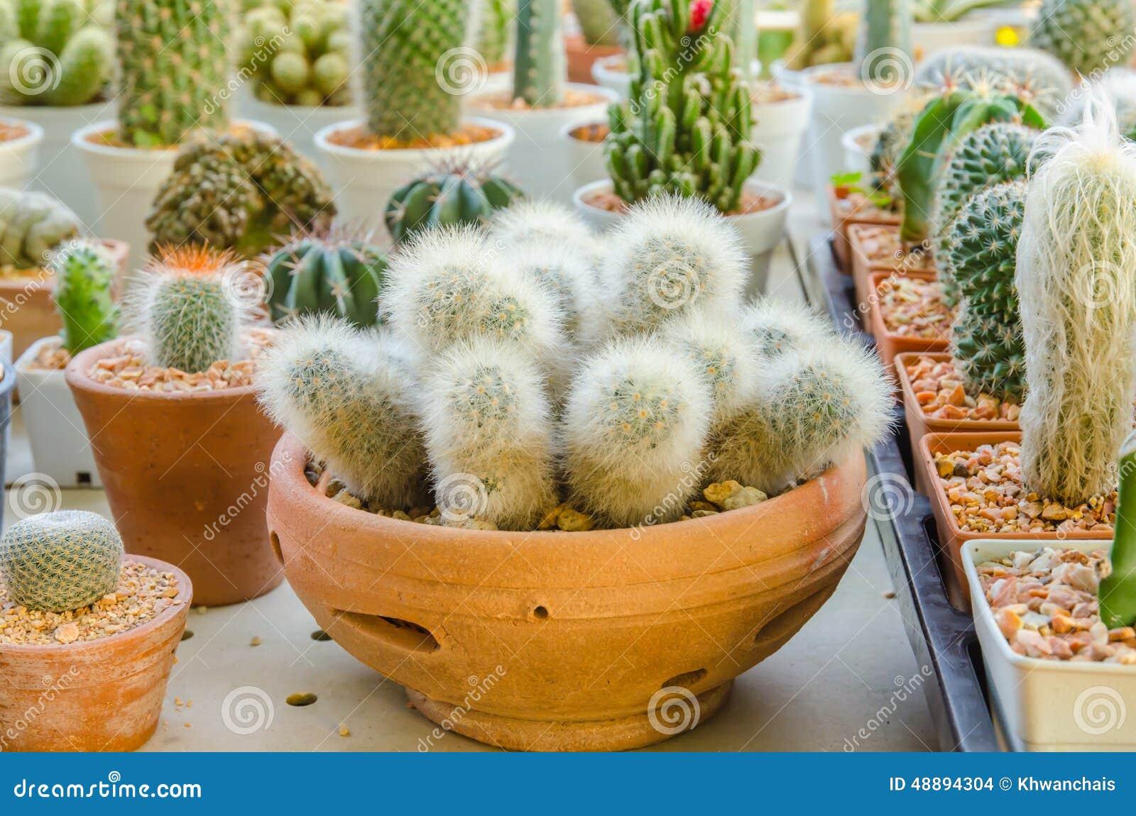 Tipos diferentes pequenos de plantas do cacto foto de for Diferentes tipos de viveros