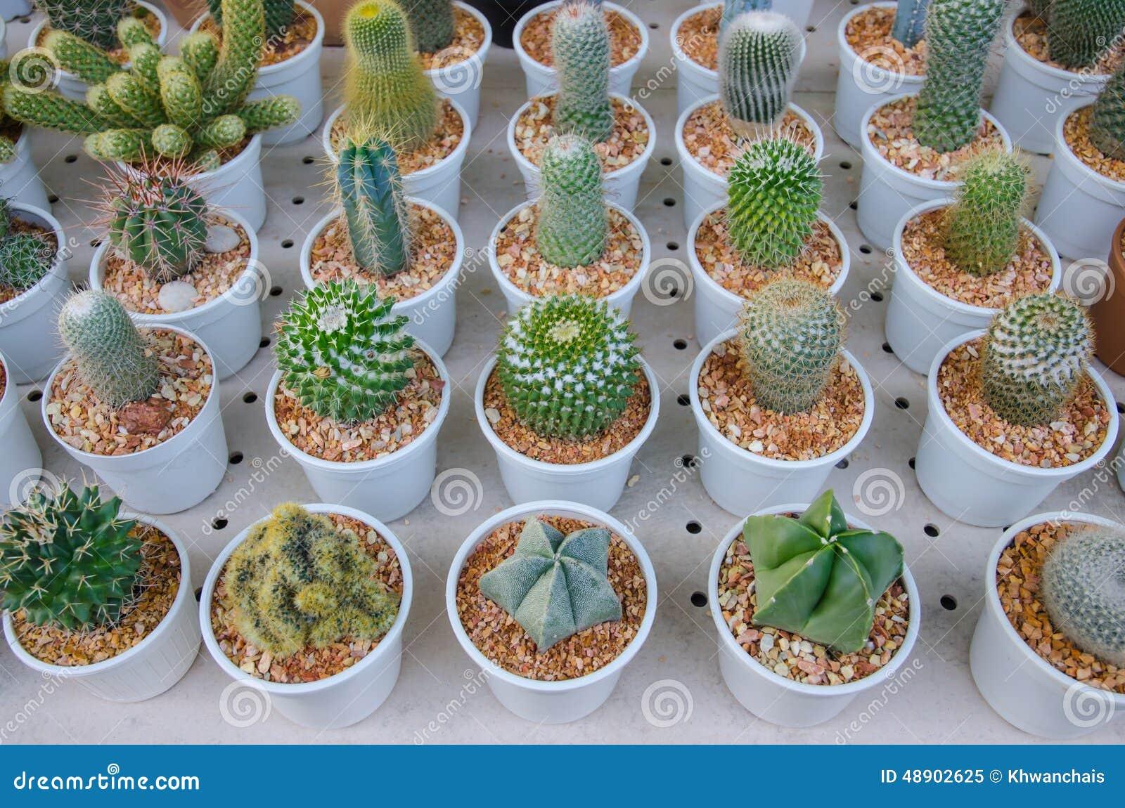 Tipos diferentes pequenos de plantas do cacto imagem de for Plantas para estanques pequenos