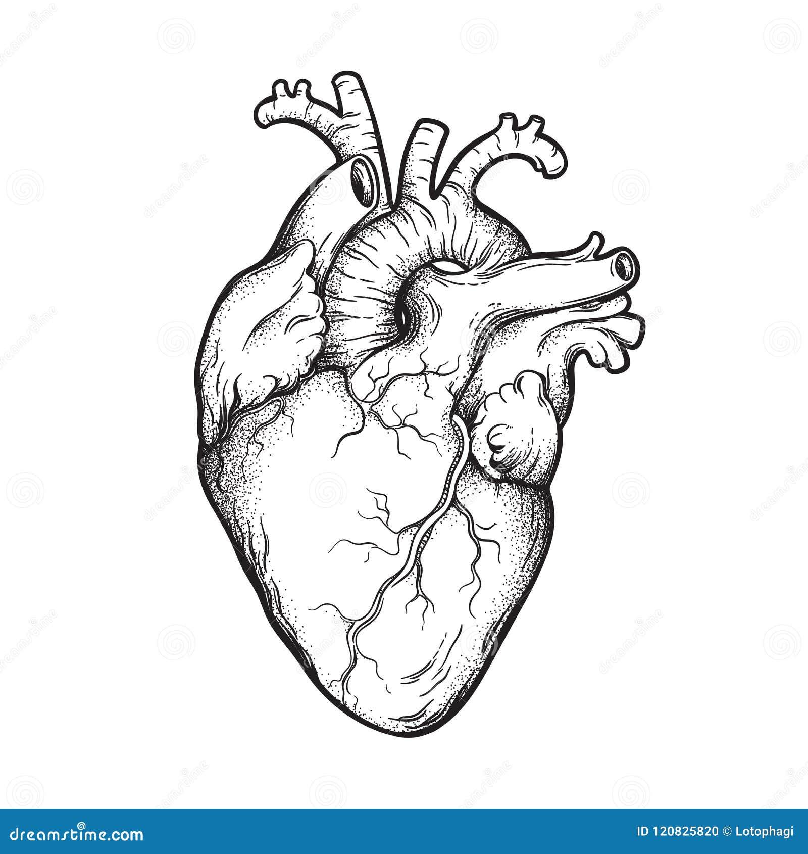 Tiré par la main anatomiquement correct humain schéma et dotwork coeur Tatouage ou illustration instantané de vecteur de concepti