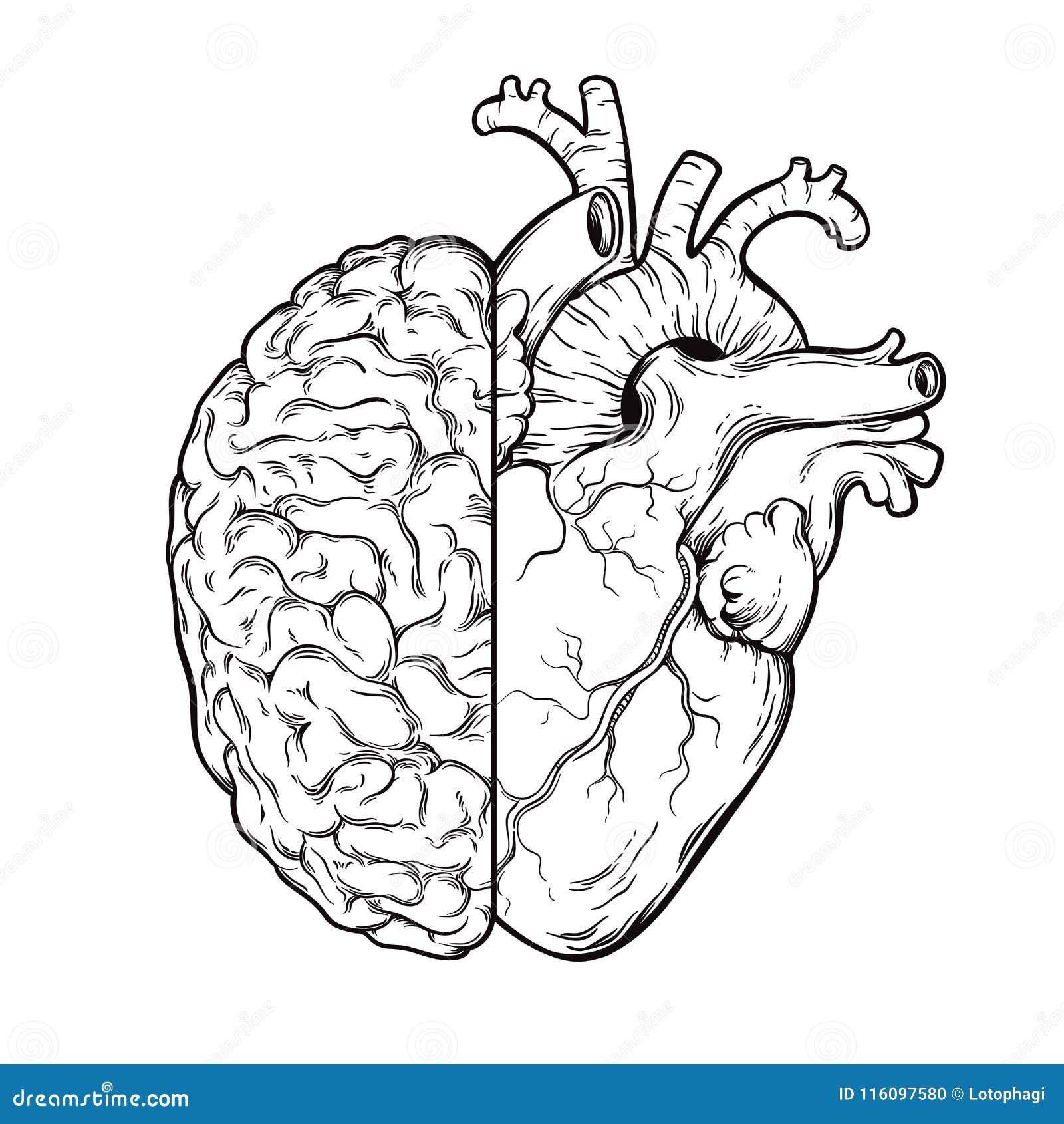 Tiré par la main halfs d esprit humain et de coeur de schéma - logique et concept prioritaire d émotion Imprimez ou tatouez la co