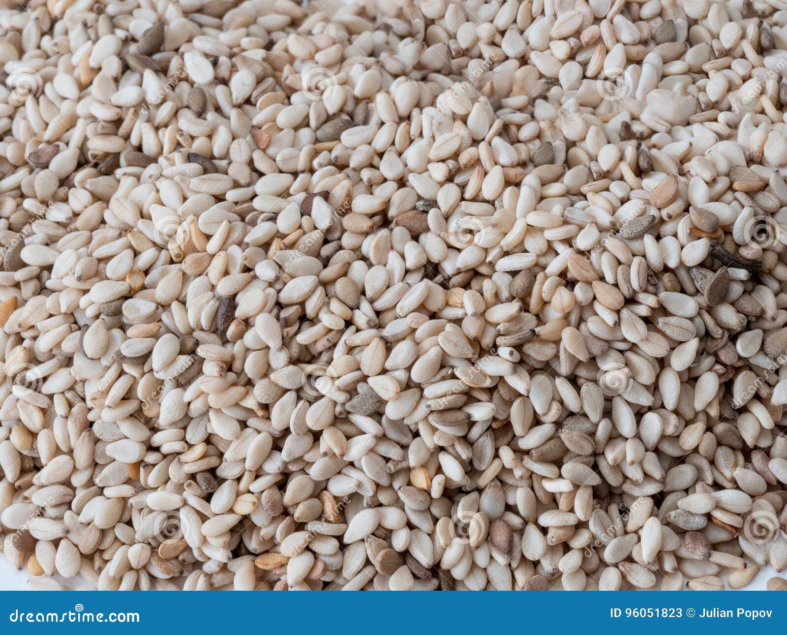 Tir étroit d un groupe des graines de sésame et de x28 ; Indicum& x29 de Sesamum ;