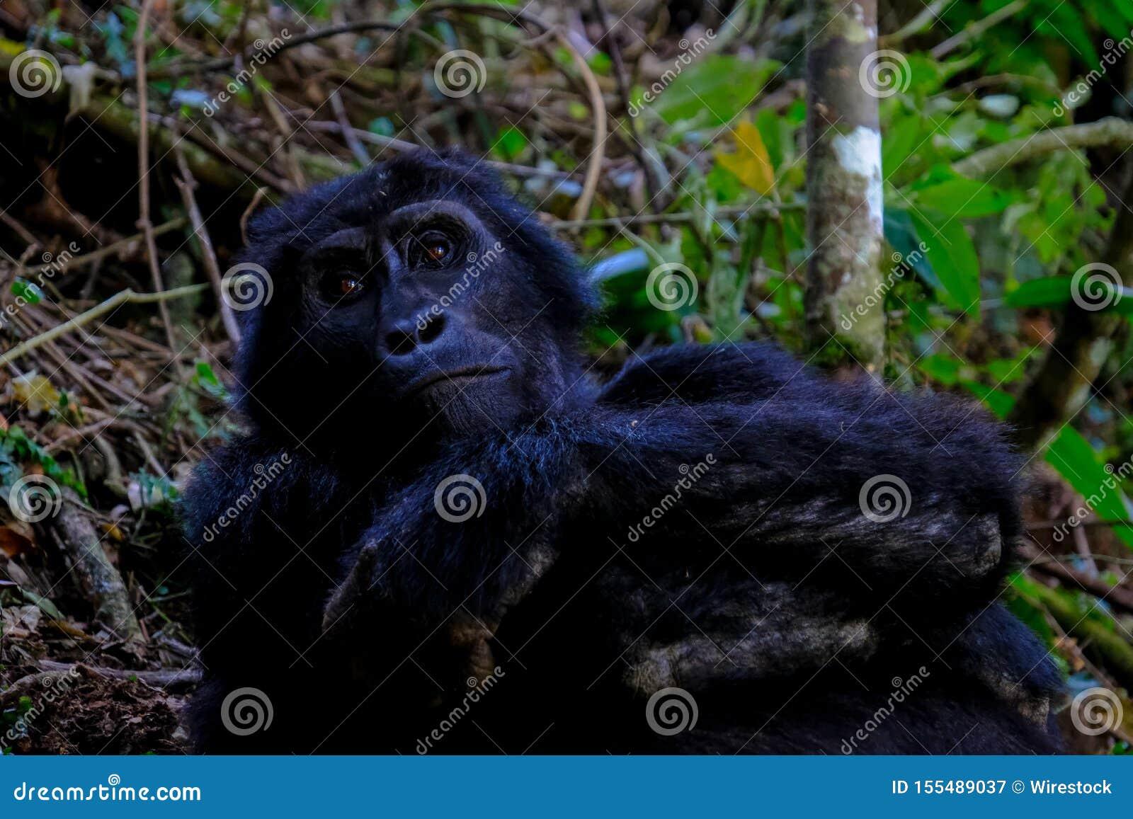 Tir étroit d un orang-outan se reposant près des arbres et des usines avec le fond naturel brouillé