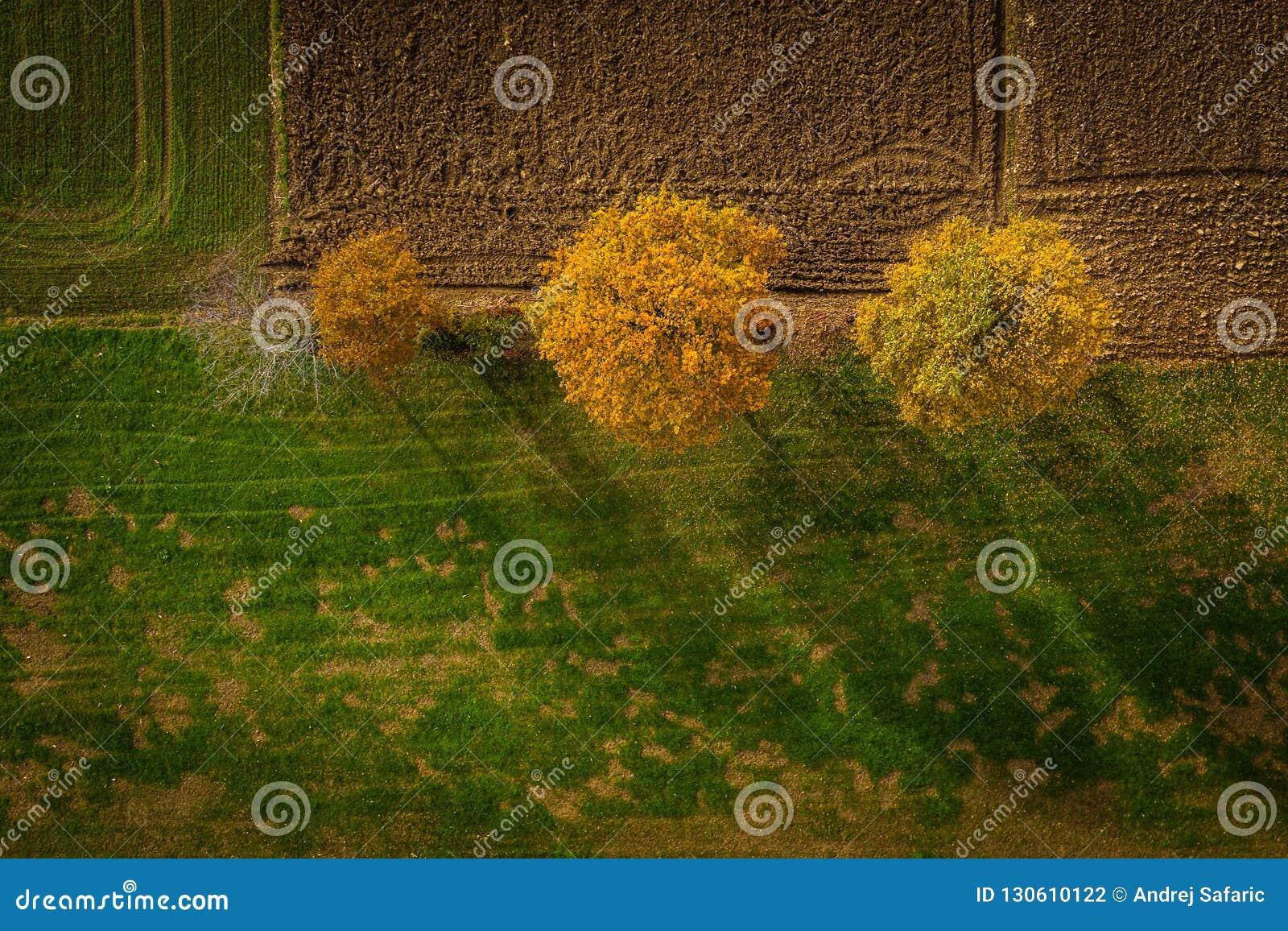 Tir aérien des arbres dans la bordure de haies, feuillage vibrant d automne
