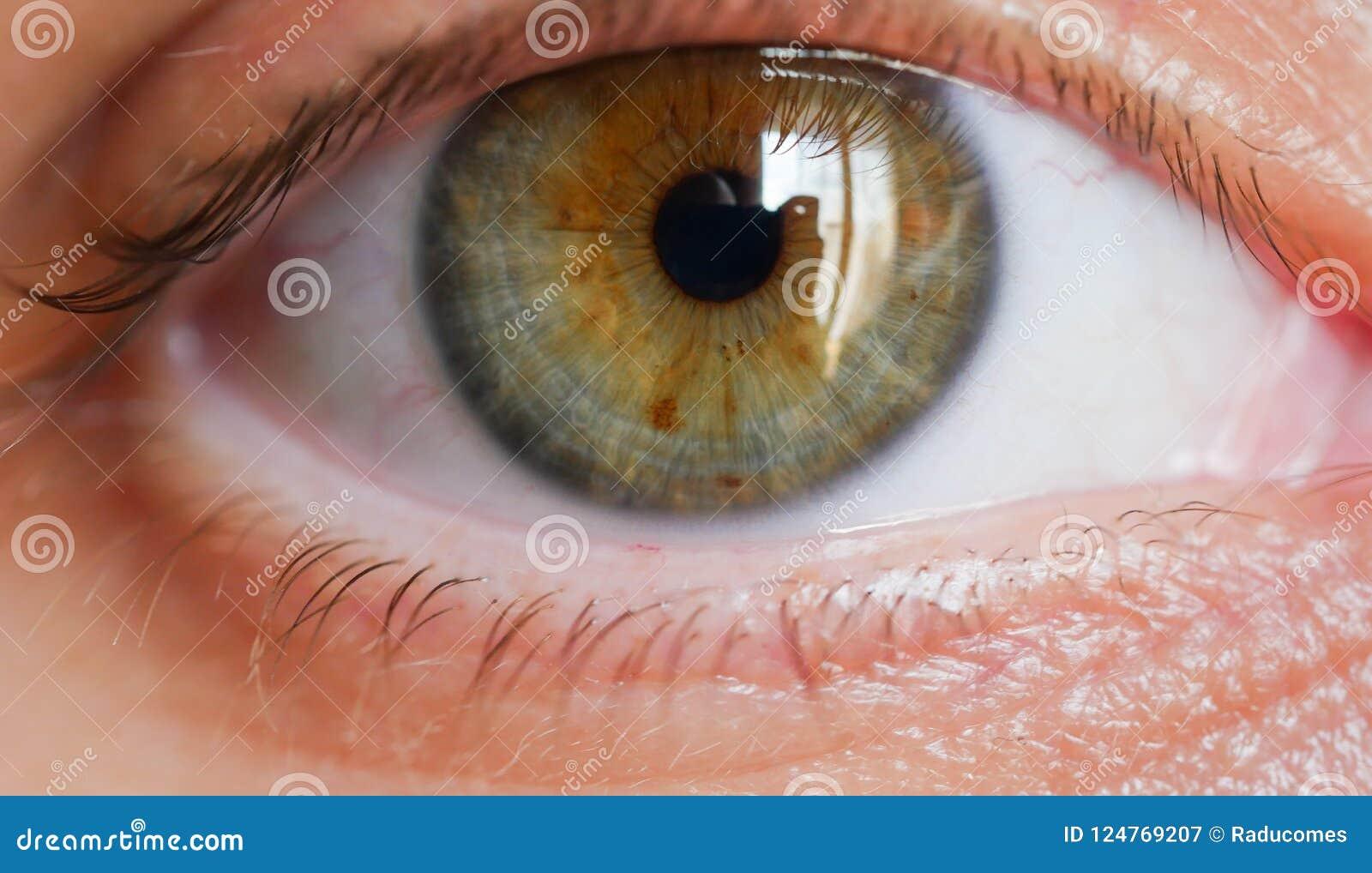 Tir femelle de plan rapproché d oeil humain