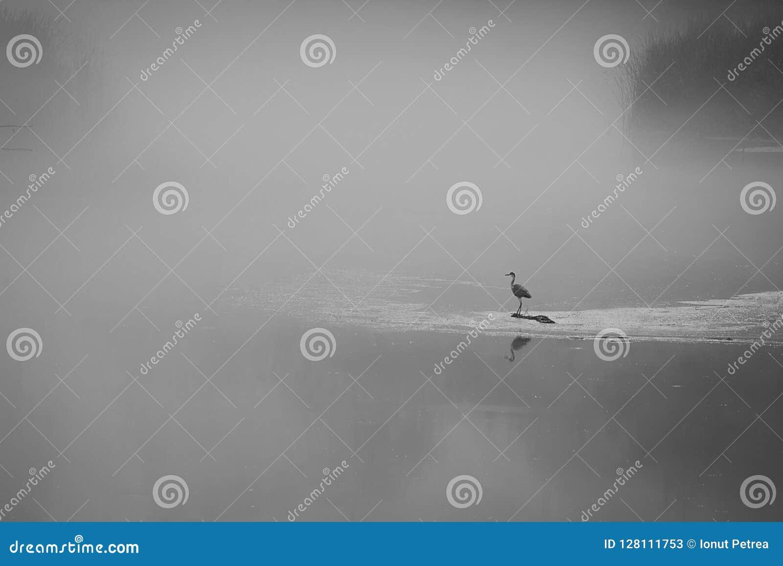 Tir noir et blanc avec un oiseau seul se reposant sur un surroun de lac