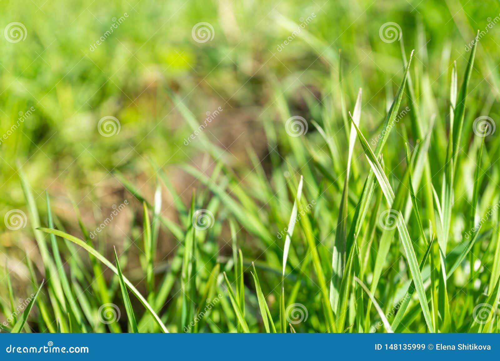 Tira la hierba verde joven en el parque