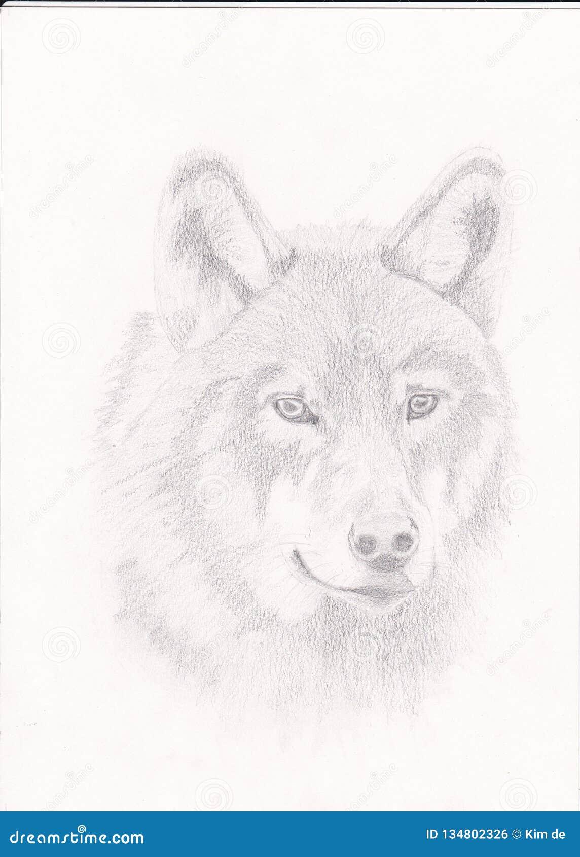 Tirando um lobo