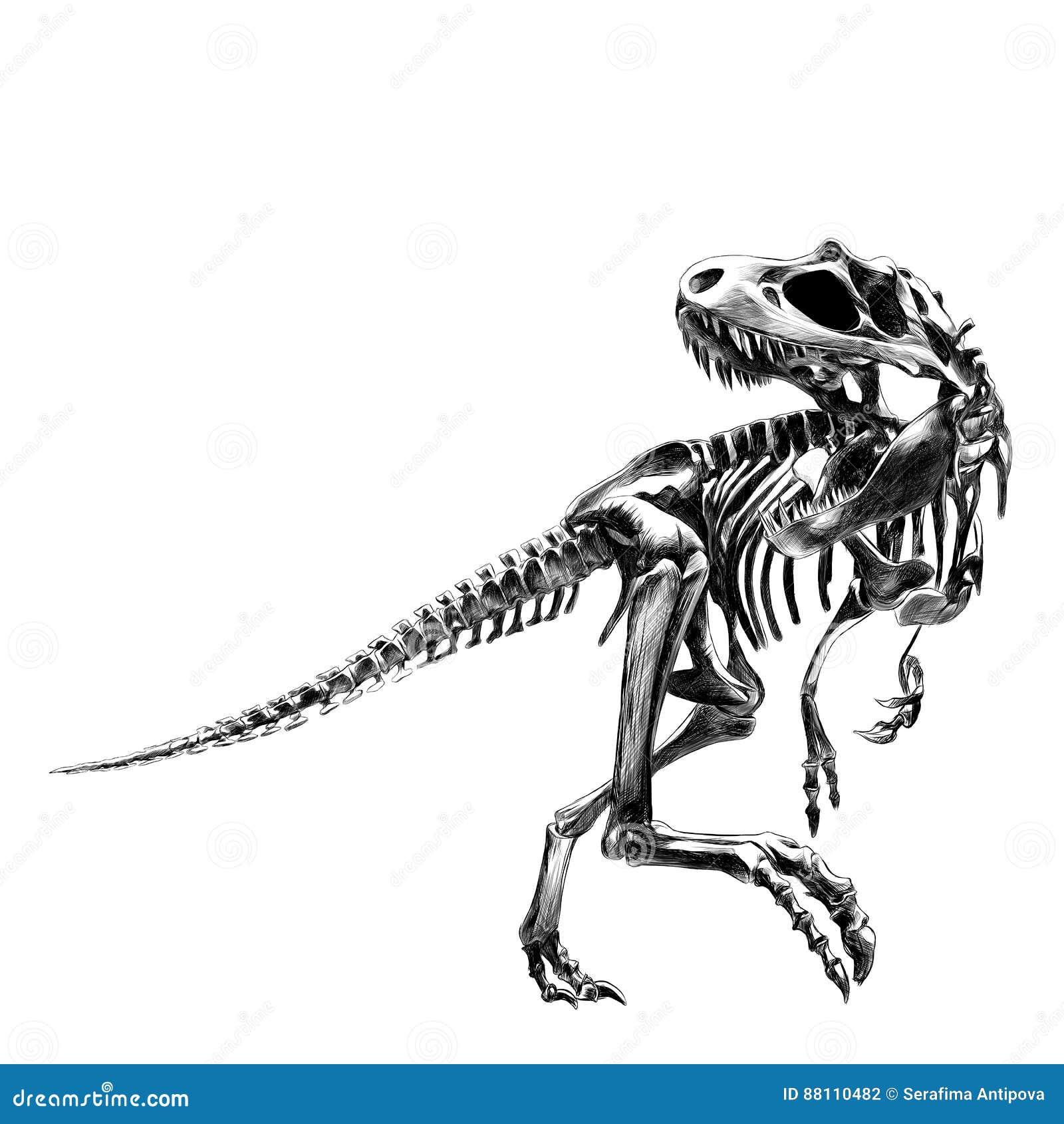 Tiranosaurio Del Esqueleto Del Dinosaurio Ilustración del Vector ...