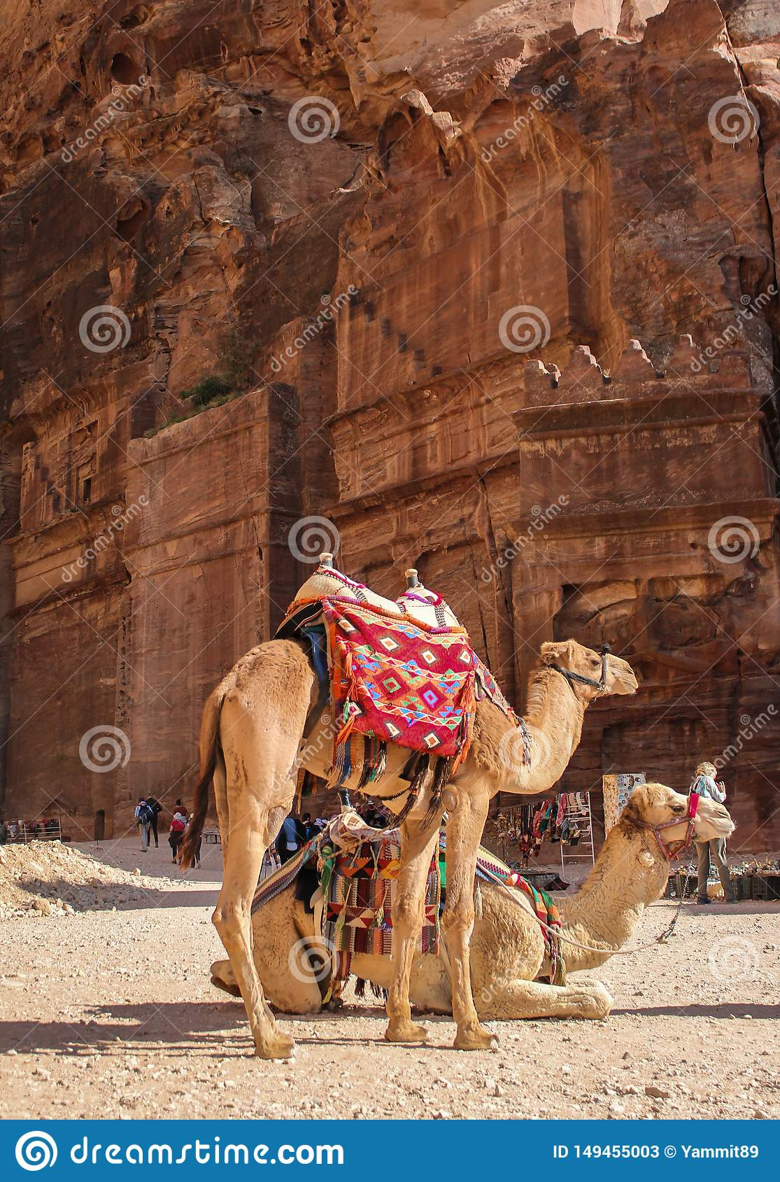 Tired camels are resting in the rock city Petra