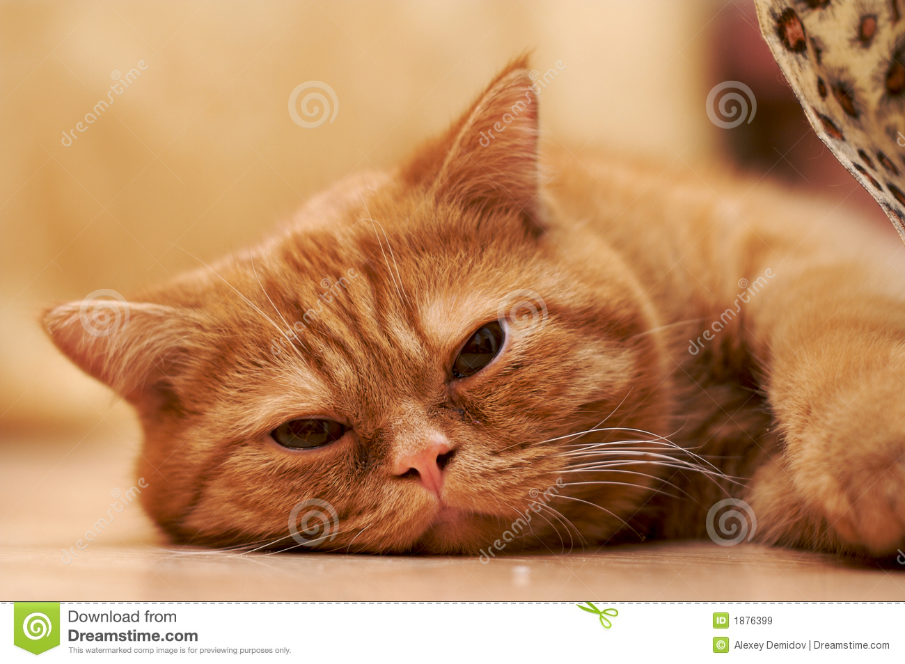 Tired Cat Royalty Free Stock Images Image 1876399