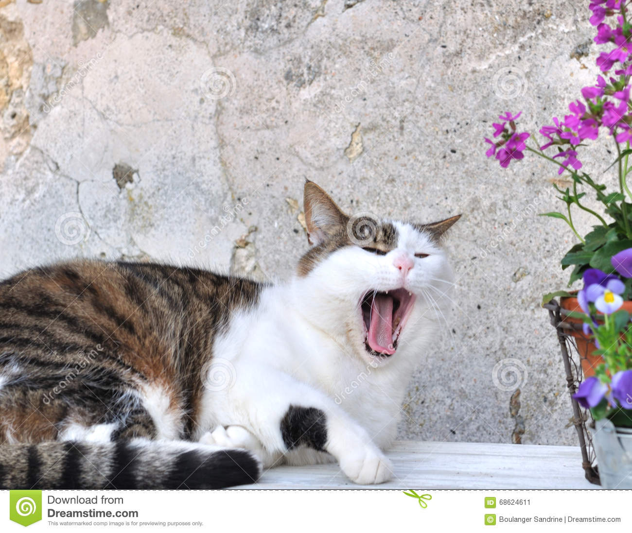 Tired cat gaping stock image. Image of rustic, pots, cute ...