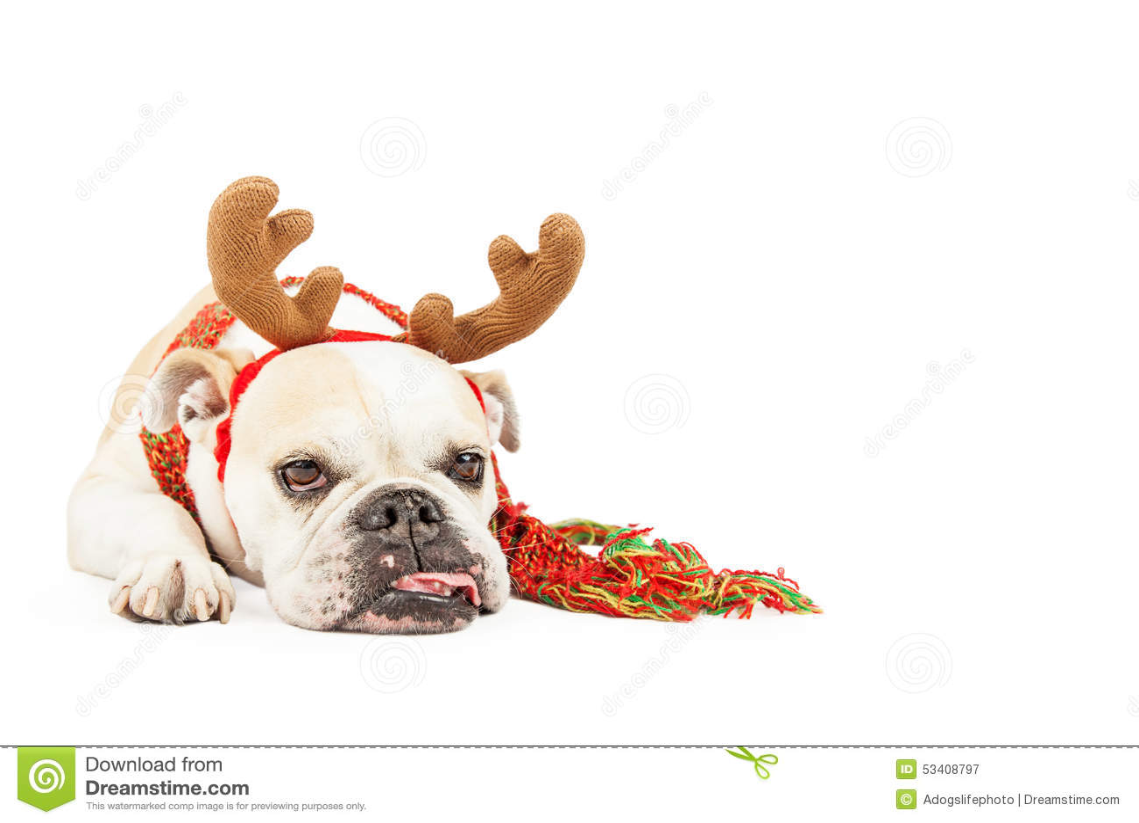 cartoon happy bulldog head
