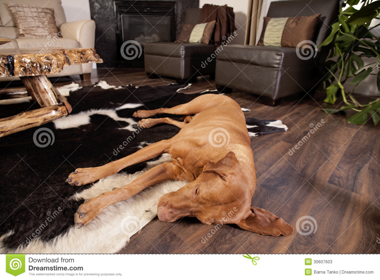 Tired Dog Stock Photos Image 30607603