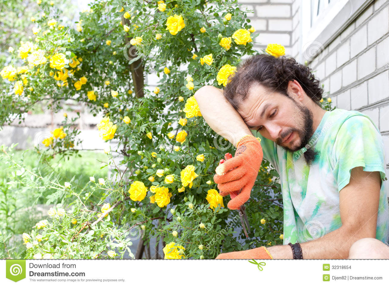 Tired Man Cutting The Rose Stock Photo Image Of Botany