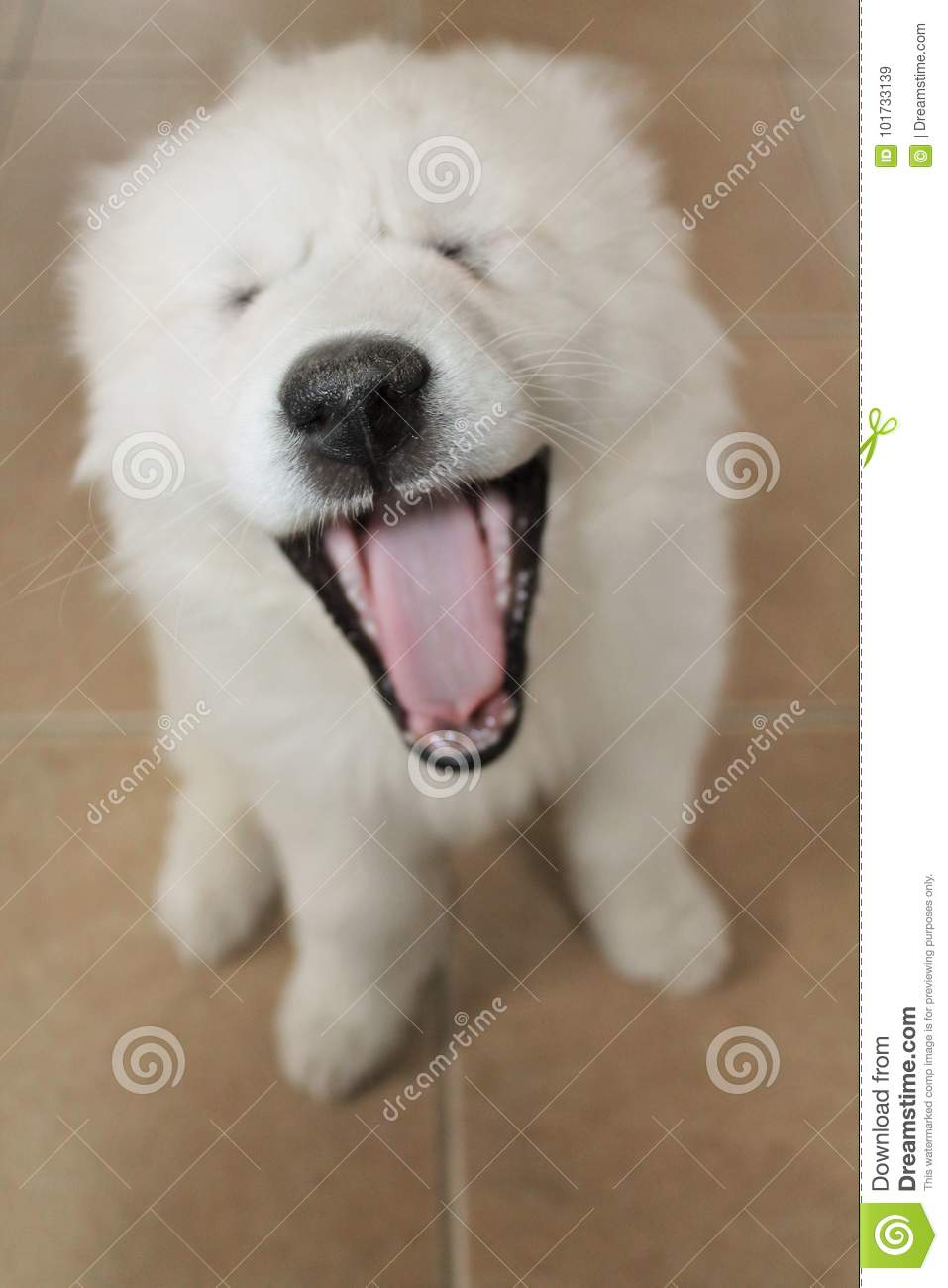 Funny Adorable Puppies Yawning
