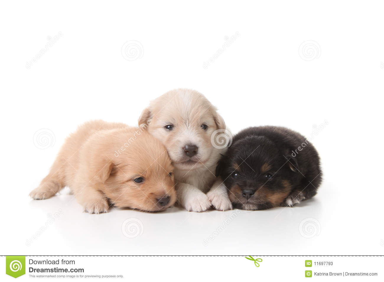 Tired Sweet And Cuddly Newborn Puppies Stock Photos - Image: 11697793