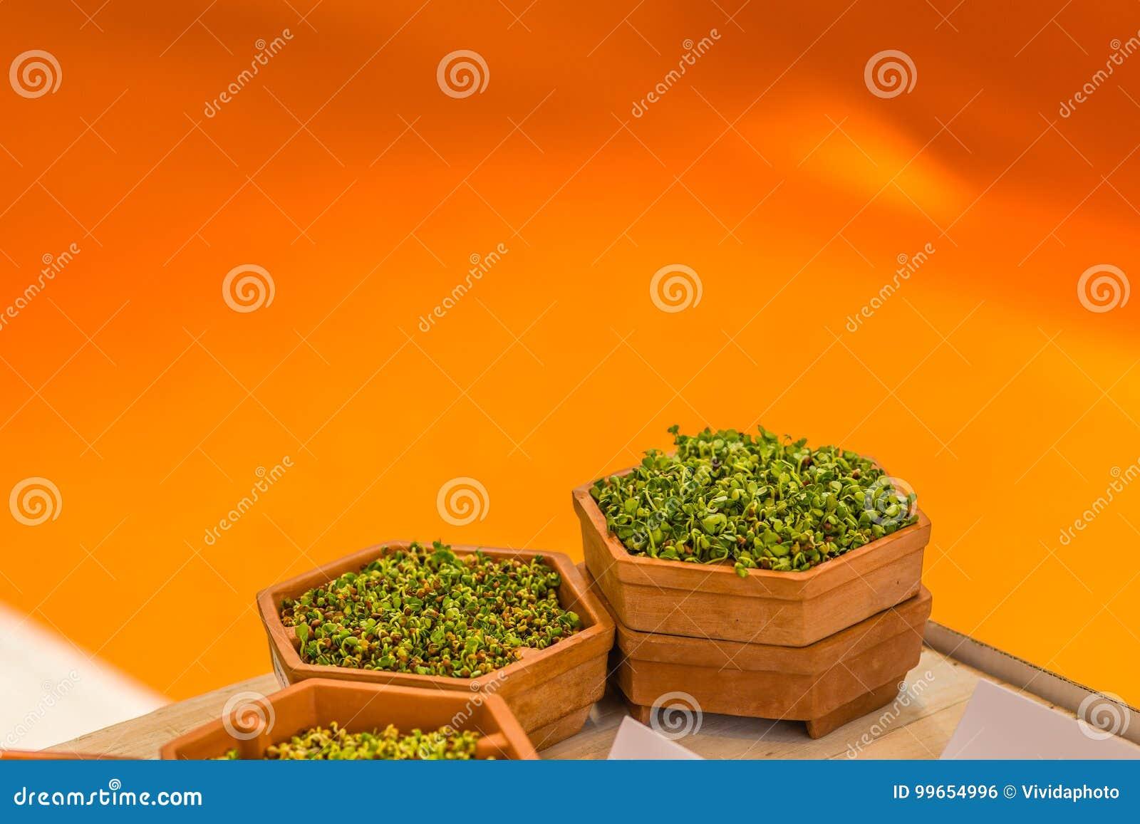 Tiri di verde in vasi