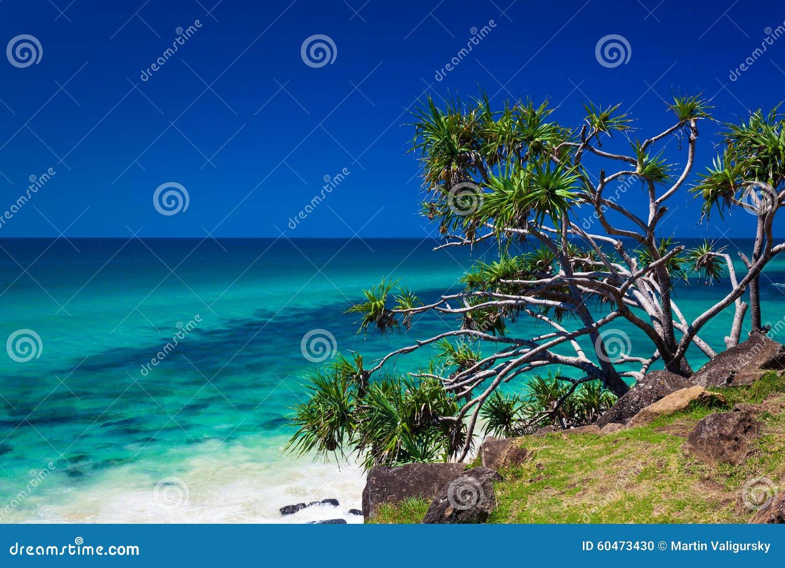 Tiri la vista in secco in teste il parco nazionale, la Gold Coast, Australi di Burleigh