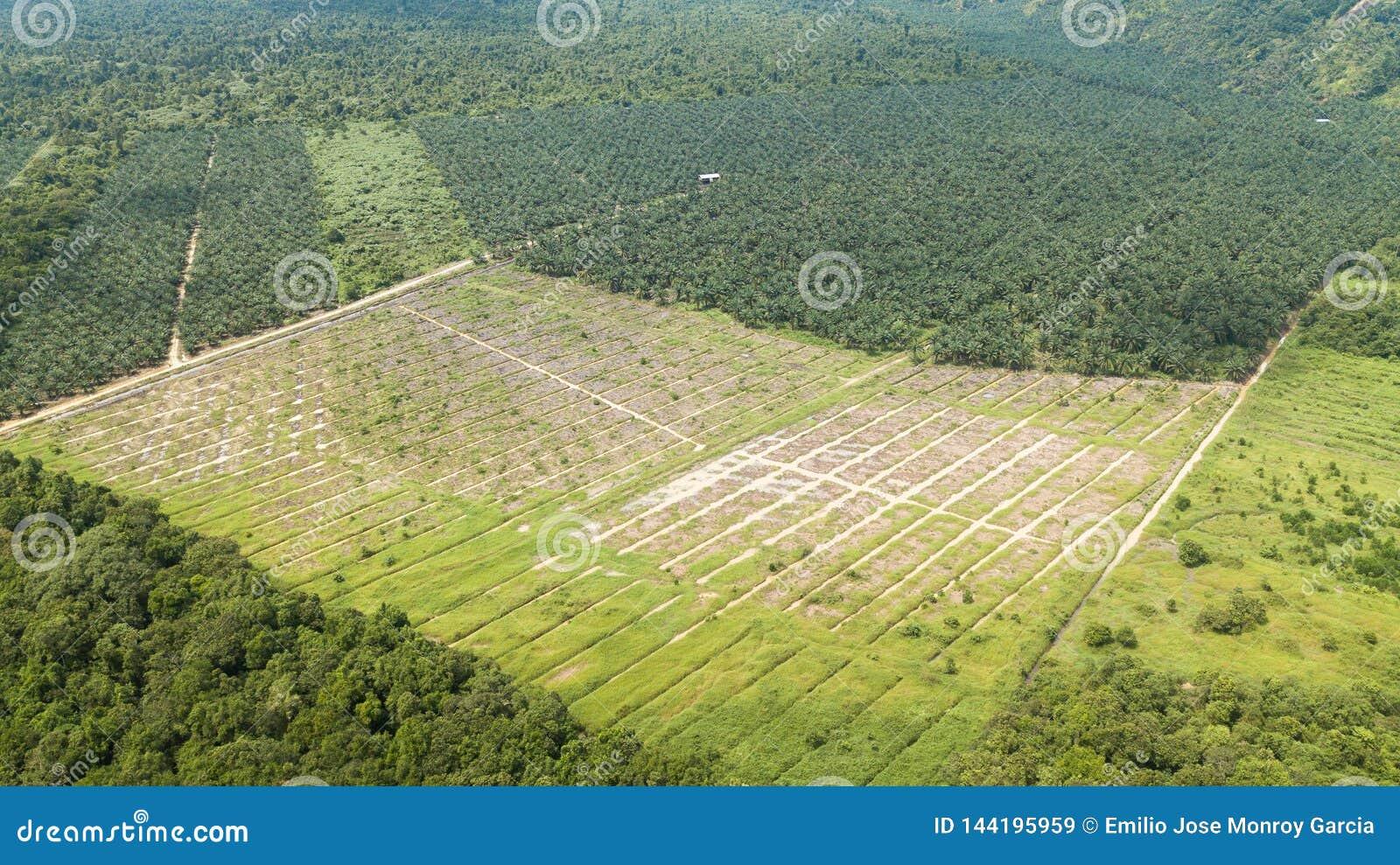 Tiro aéreo em Bornéu do óleo de palma e da plantação de borracha