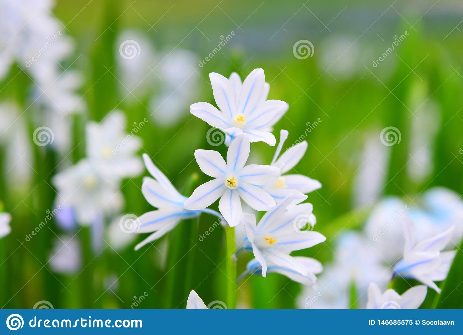 Tiro macro de flores blancas minúsculas