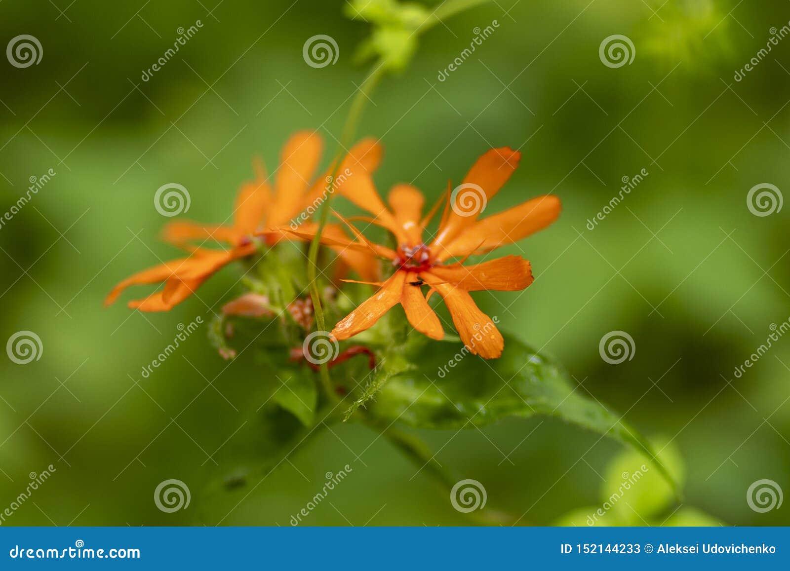 Tiro macro de la flor anaranjada en foco suave