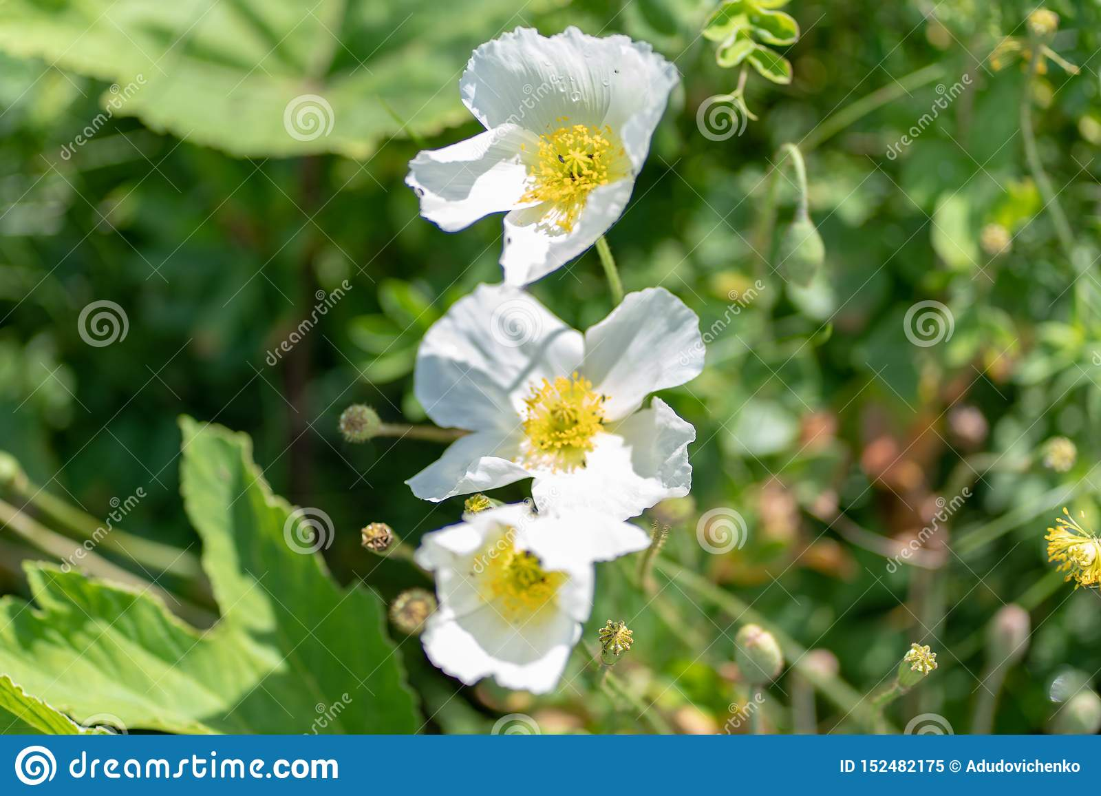 Tiro macro de una flor blanca en un fondo natural en un foco suave