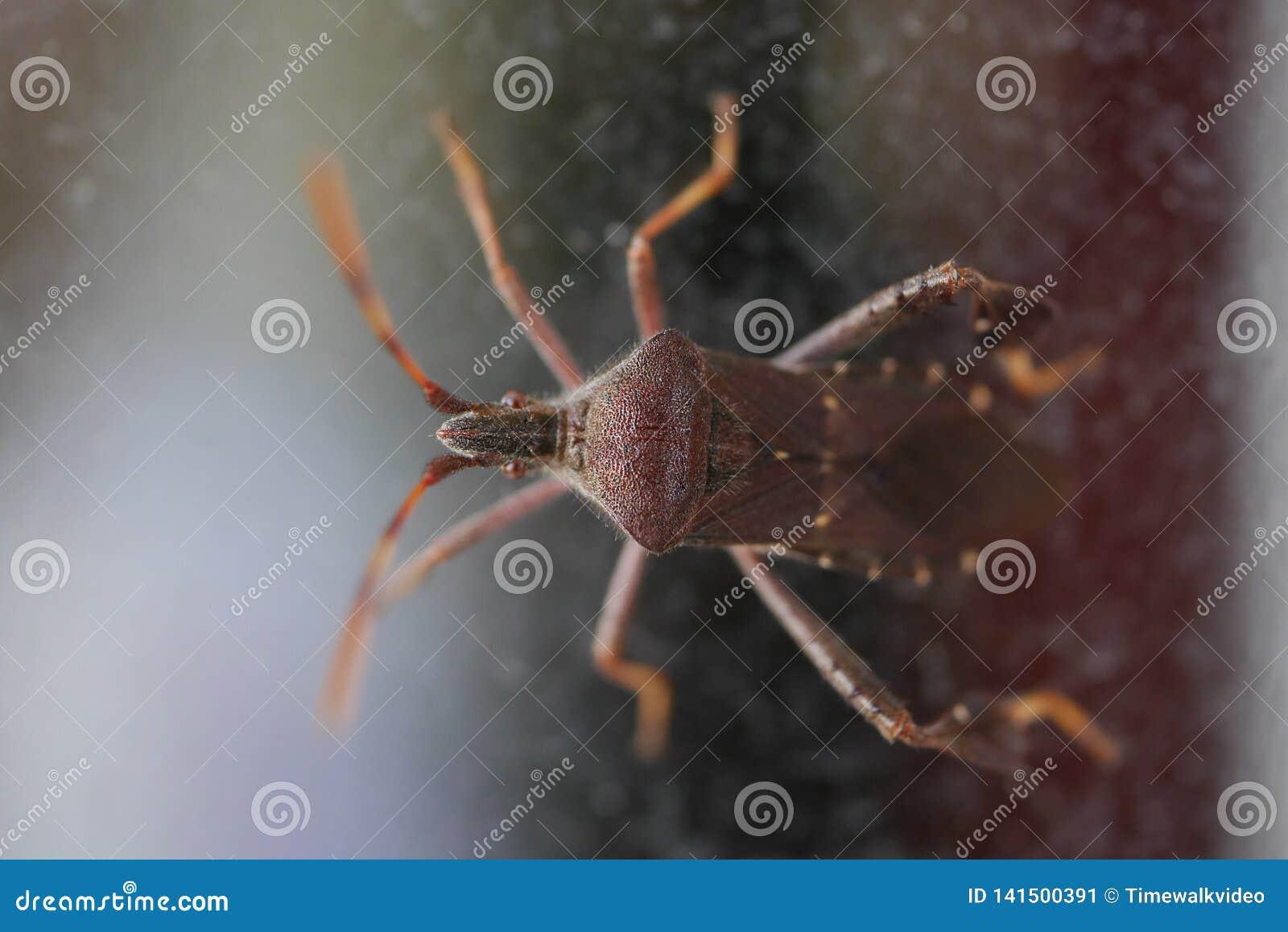 Tiro macro del escarabajo púrpura-rojo extraño