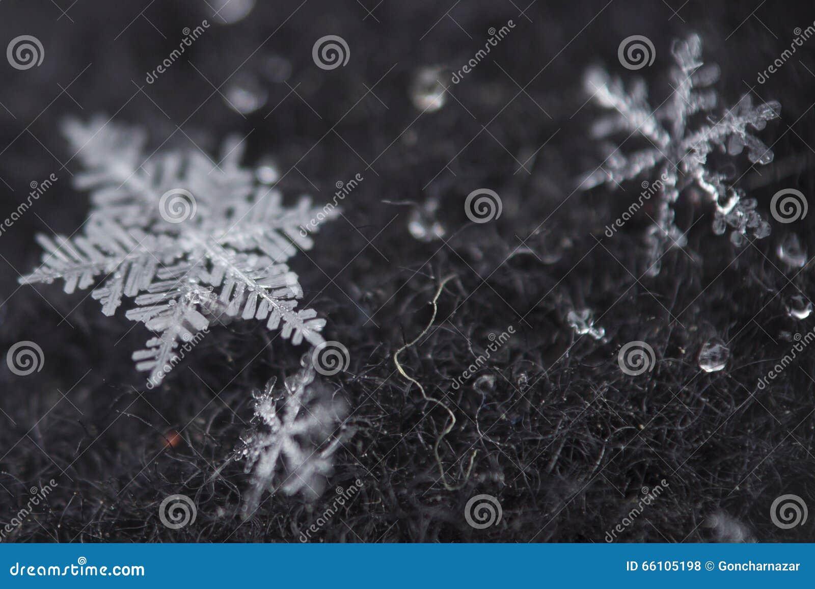 Tiro macro do floco de neve