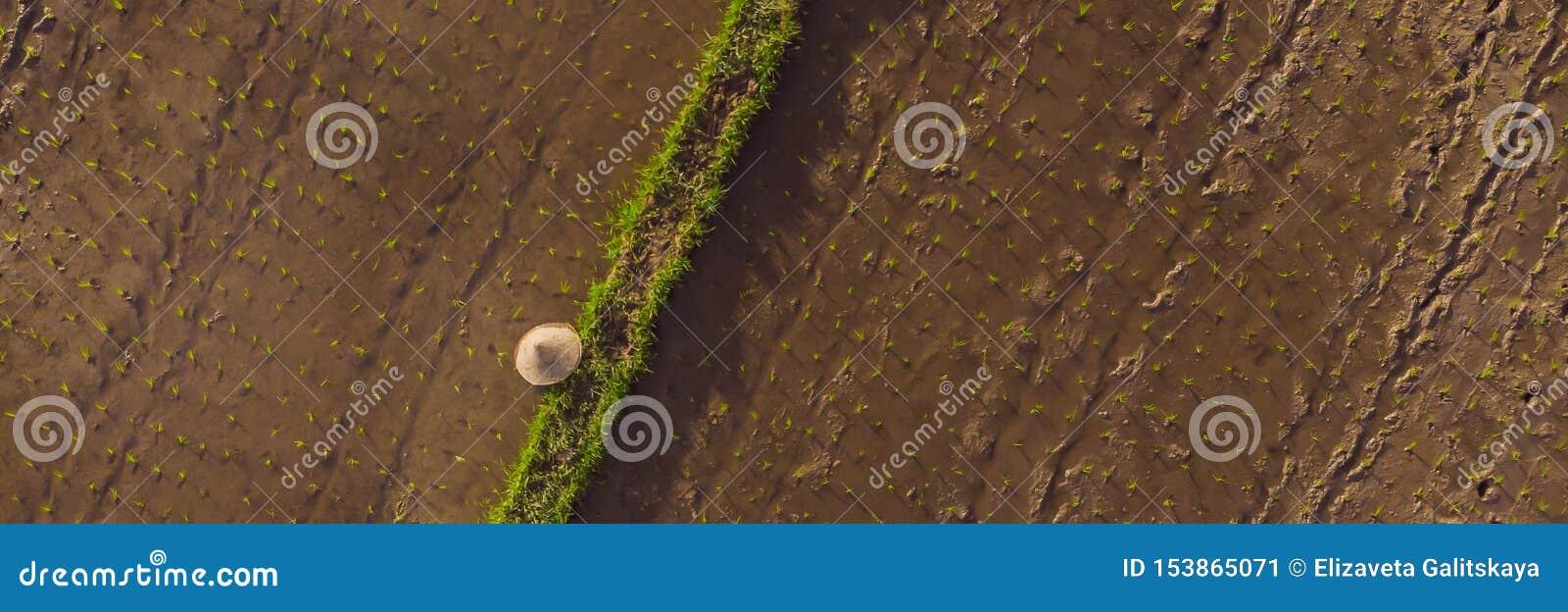 Tiro A Reo De La Terraza Del Arroz E Imagen De Archivo
