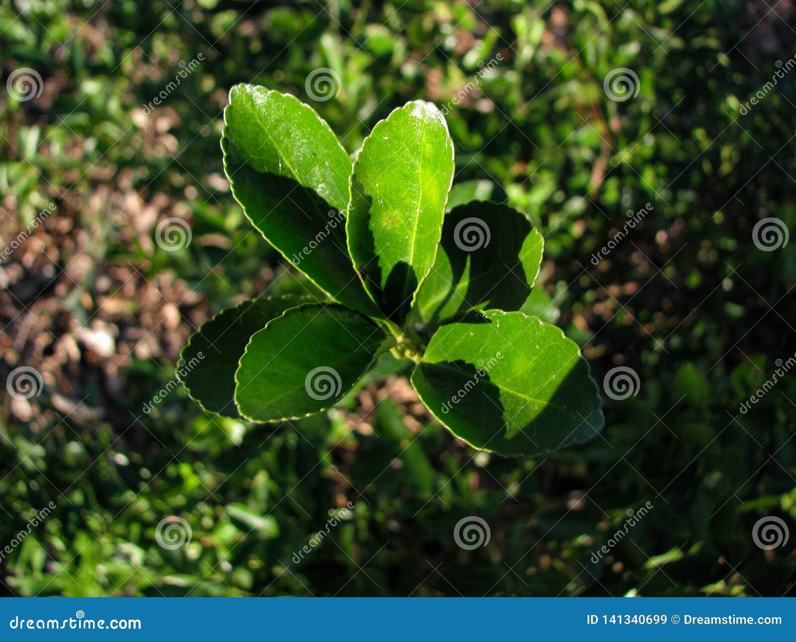 Tiro superior de uma planta verde